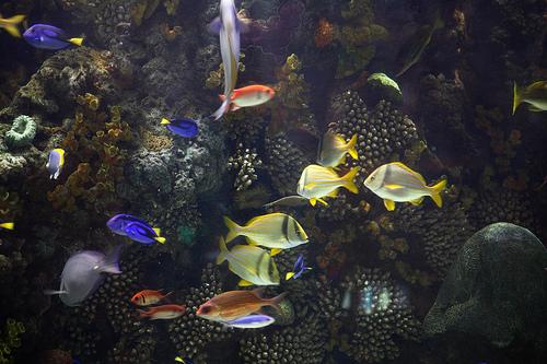 Aquarium at the mirage las vegas for Tropical fish las vegas