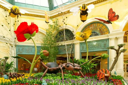 Exhibition Stand Las Vegas : Bellagio s conservatory botanical gardens