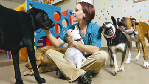 Best friends pet care pet boarding at disney world for Dog boarding at disney world
