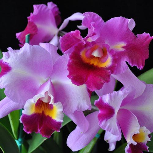 Hawaii Concierge Akatsuka Orchid Gardens