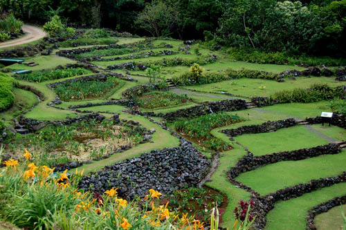 Lush Terraced Gardens Of Limahuli Kauai Hawaii