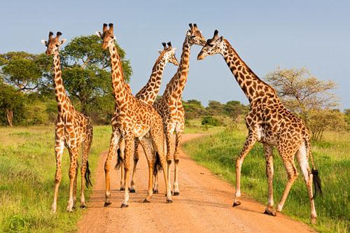 Discover Amazing Tanzania - Selous Safari Company